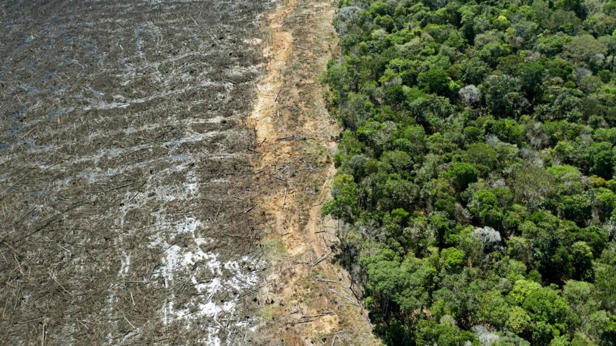 Global Rainforest Destruction Surged in 2020, Study Finds
