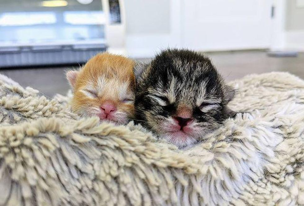 kittens, 3 days part, born, brothers