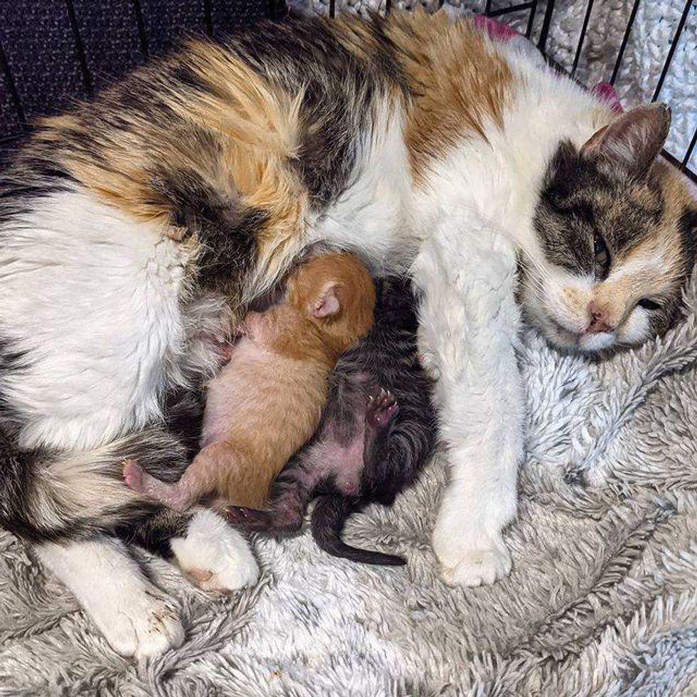 kittens, cat mom, reunited