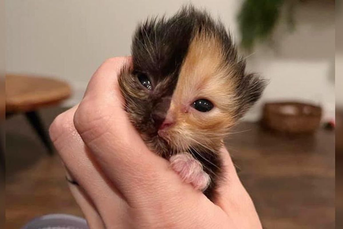 Two-faced Kitten Found in a Wall Now Has a Big Family to Cuddle