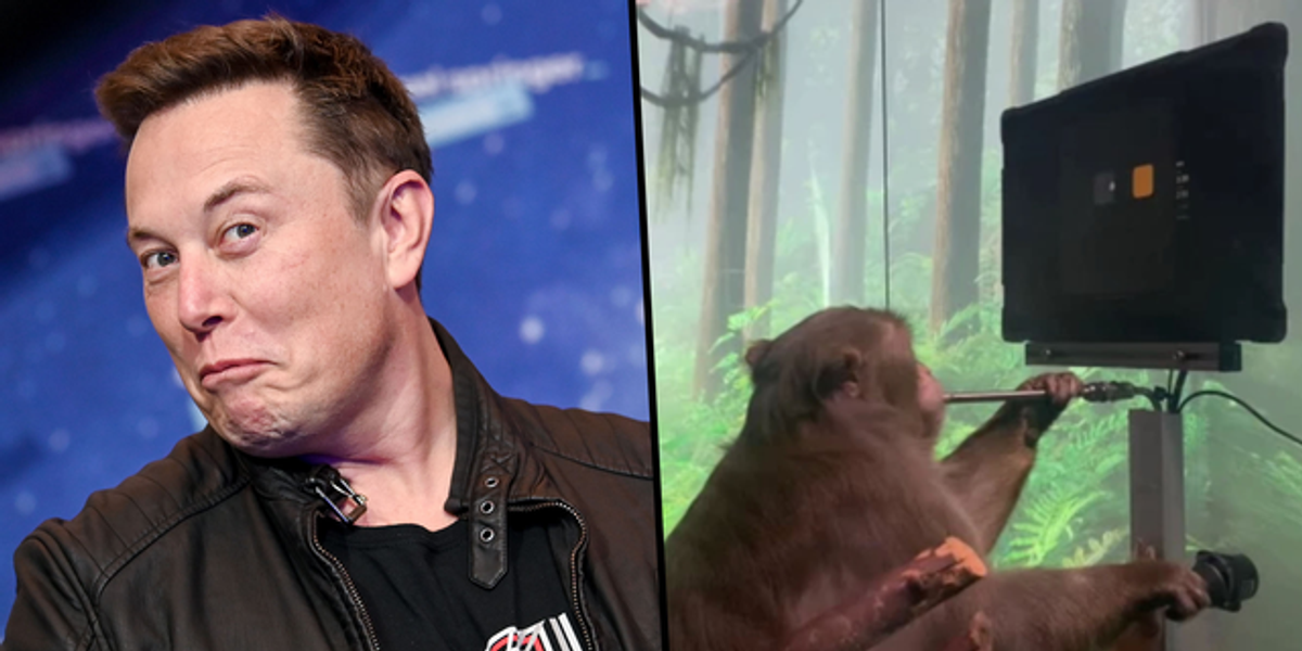 Elon Musk's Brain Chip Company Neuralink Released a Video of a Monkey Playing Video Games With Its Mind