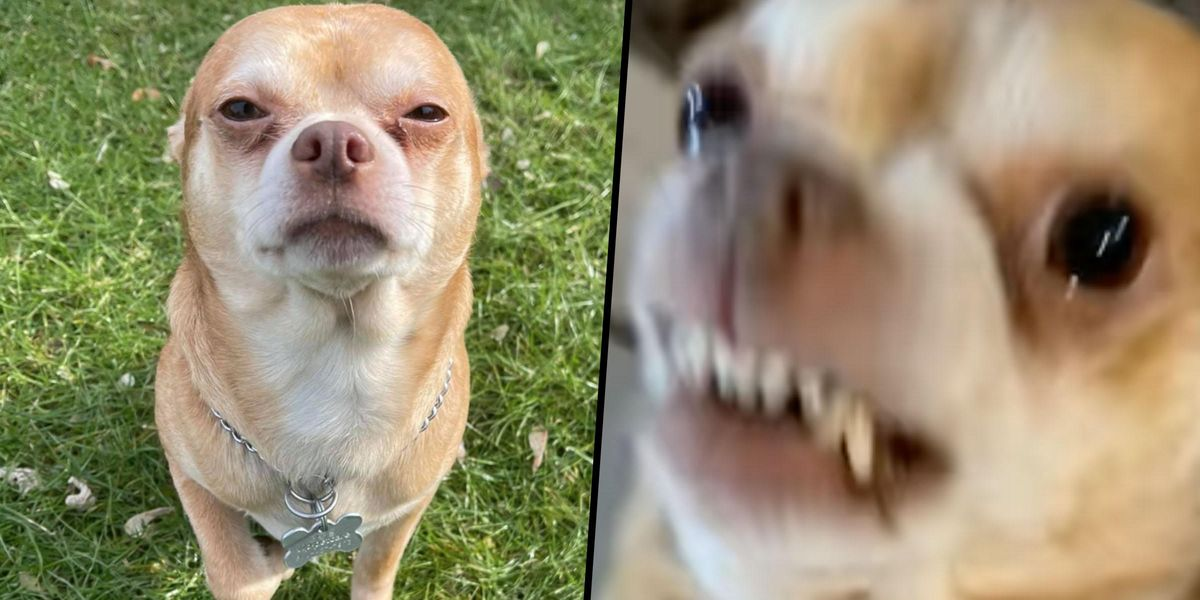 'Haunted Victorian Child' Dog Wins Hearts With Hysterically Honest Adoption Post