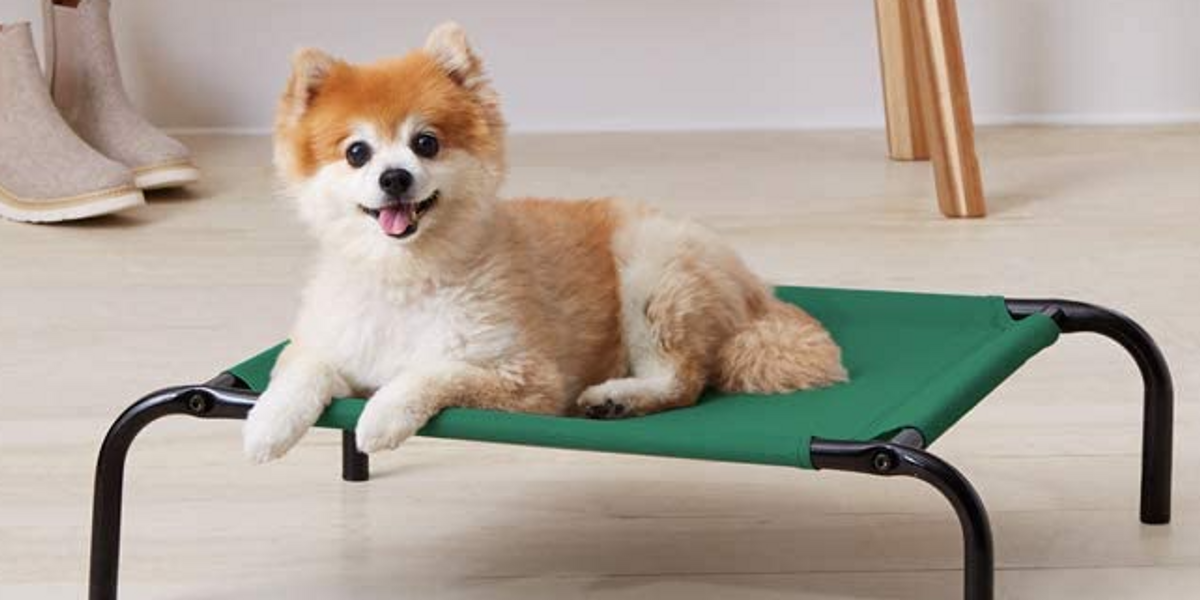 37 Pet Products With Over 5K Reviews That Pet Owners Swear By