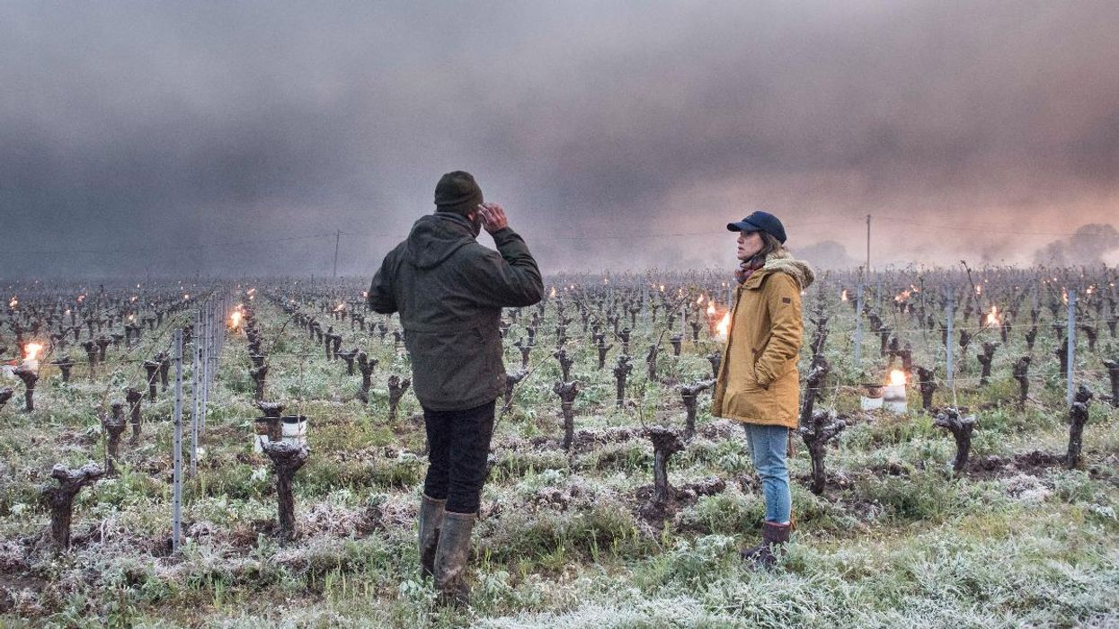 Climate Threatens 2021 French Wine Crop