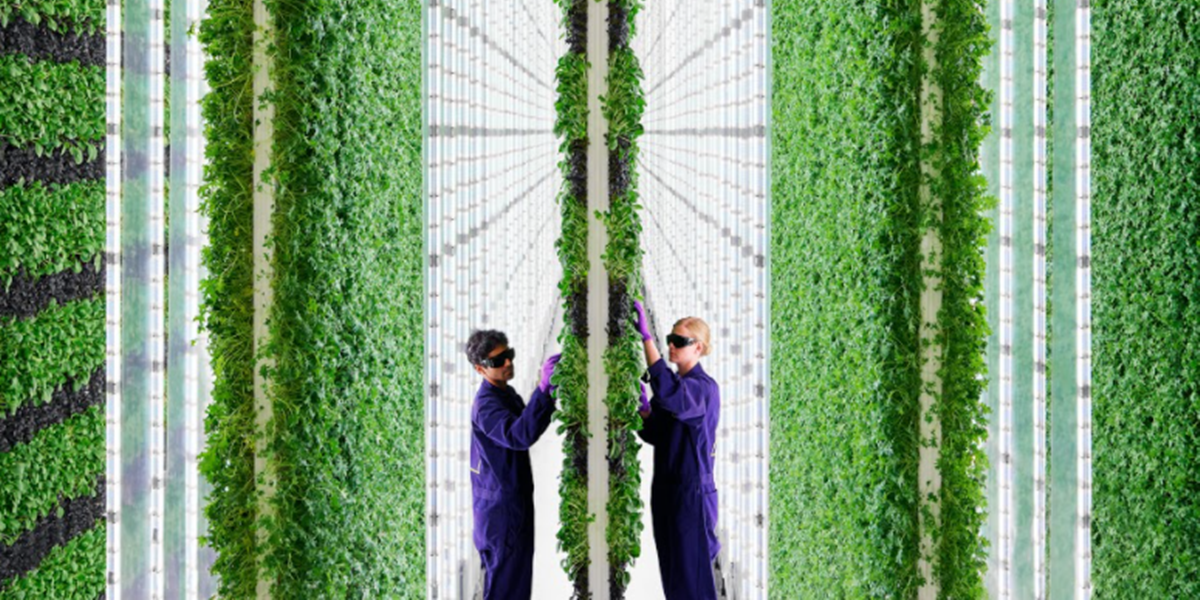 Check out this futuristic, organic vertical farm being built in Compton, California