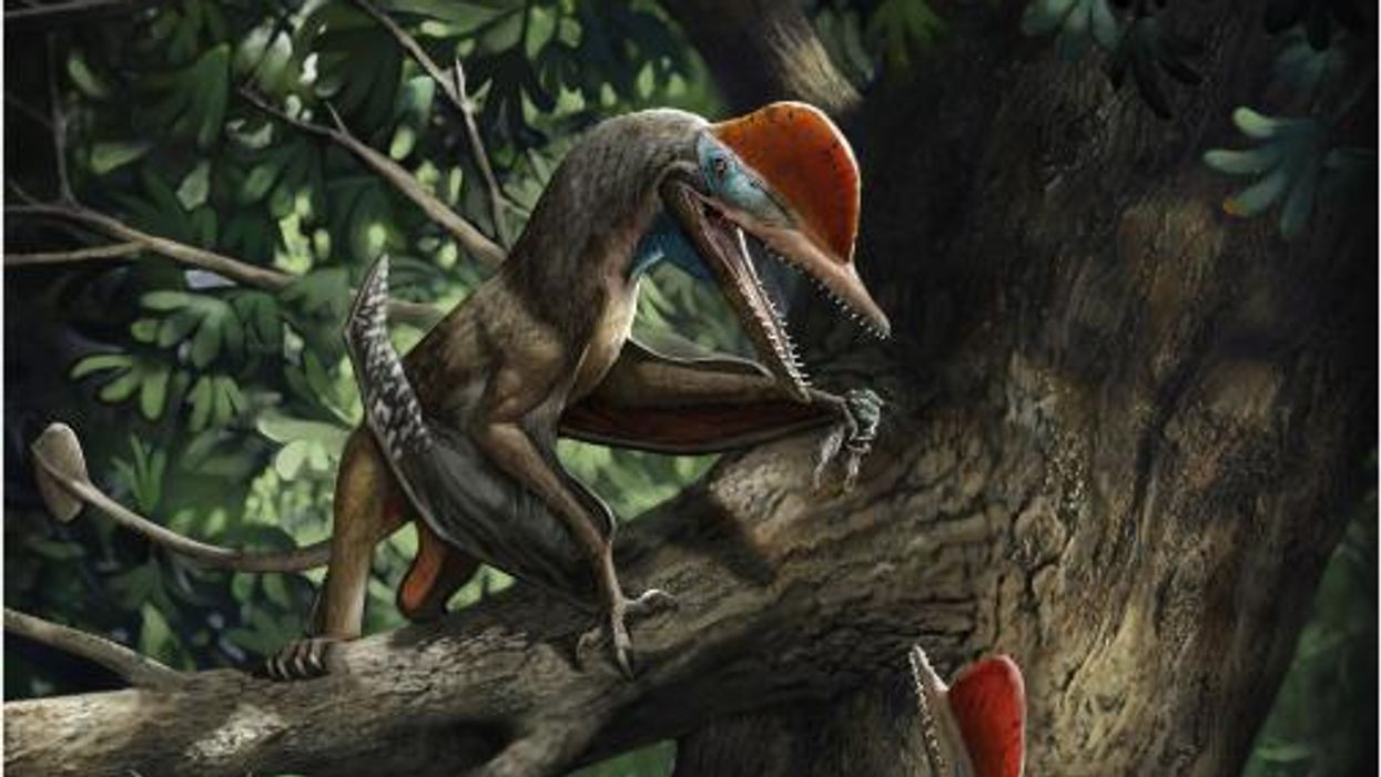 160-million-year-old 'Monkeydactyl' was the first animal to develop opposable thumbs