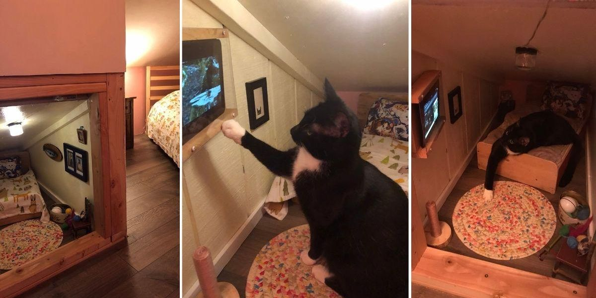 Couple builds mini-bedroom for their cat, complete with a TV for watching birds on YouTube