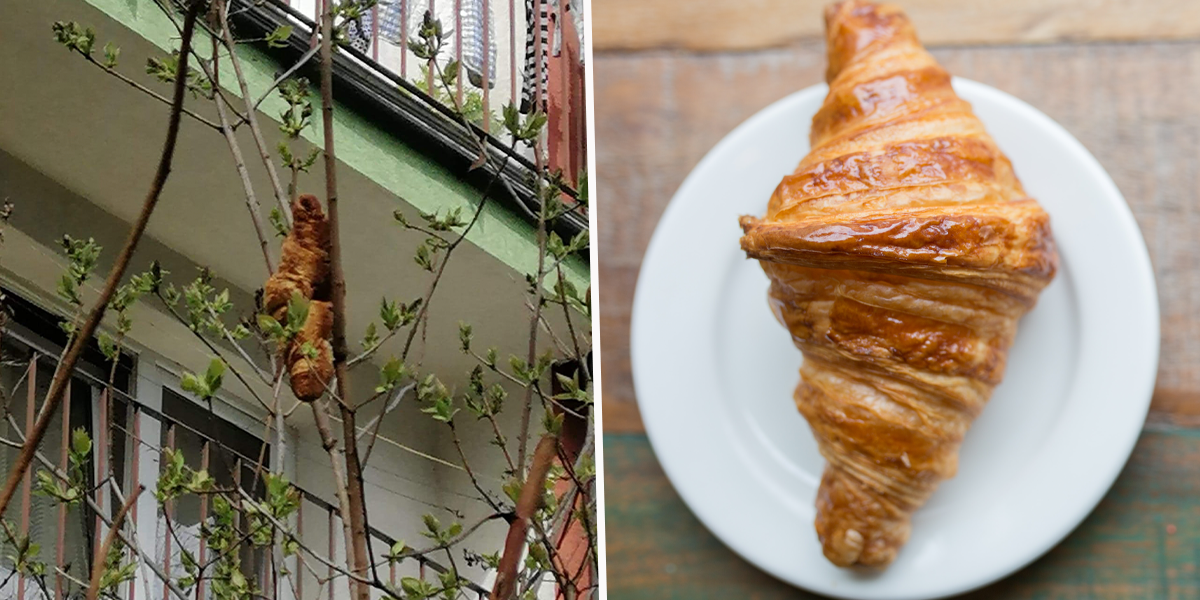 Officials Called To Deal With 'Dangerous Beast' Find Its a Croissant on a Tree