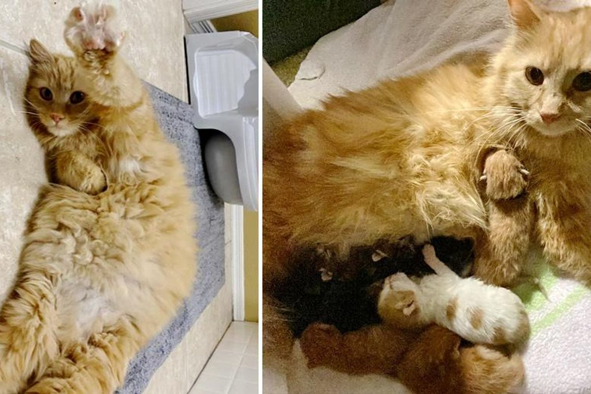 Cat Shows Up Outside Family's Home to Have Her Kittens and Adopts 2 More that Needed Her
