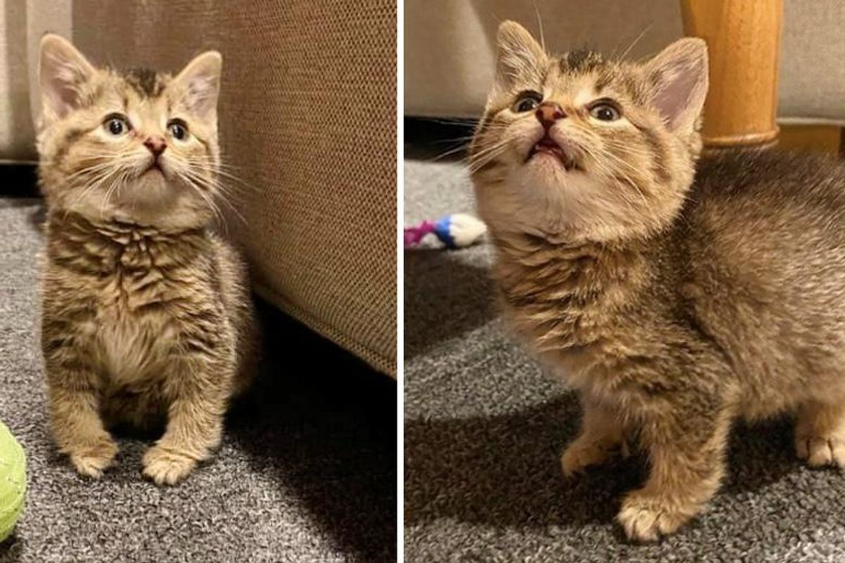 Kitten that Hops Like a Bunny, Turns into the Happiest Cat with Endearing Personality