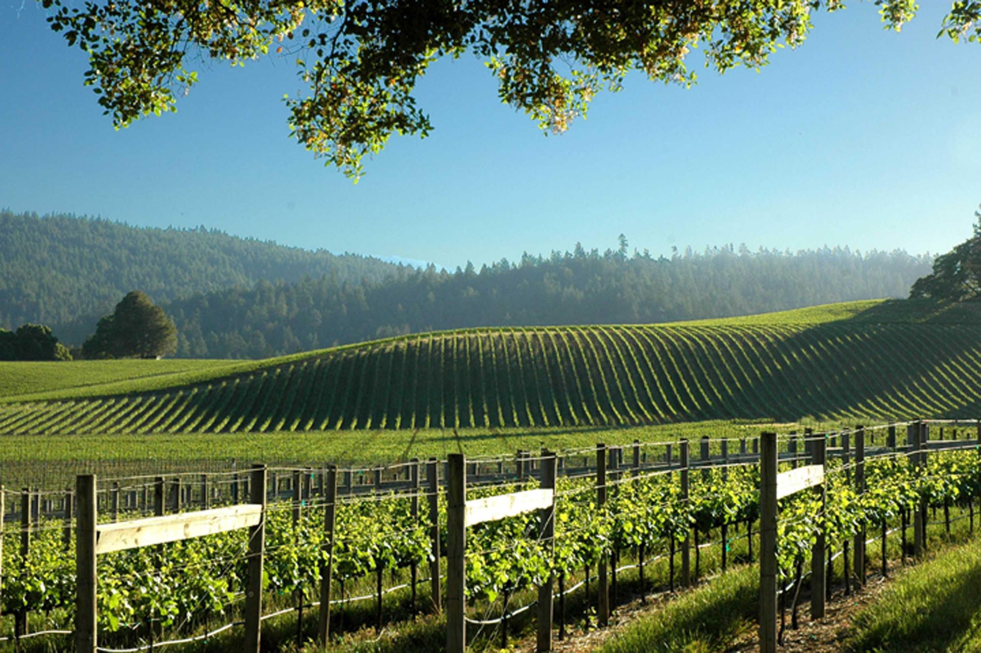 Make a wine weekend of it during Anderson Valley's Pinot Month