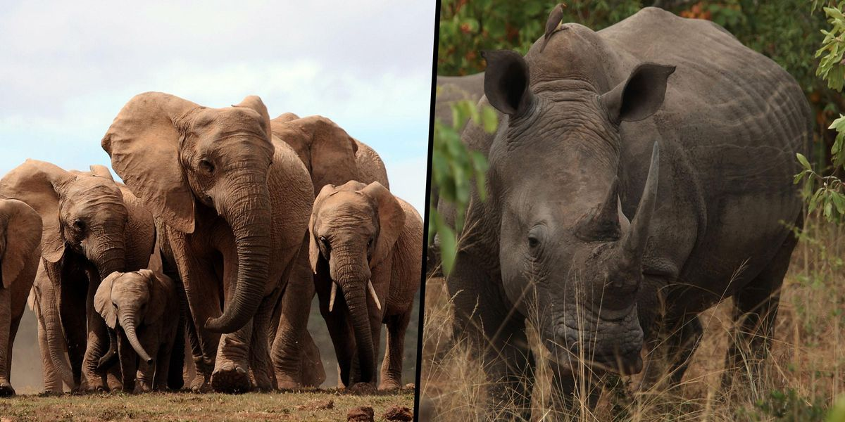 Poacher Trampled to Death by Elephants While Hunting Rhinos at South African National Park