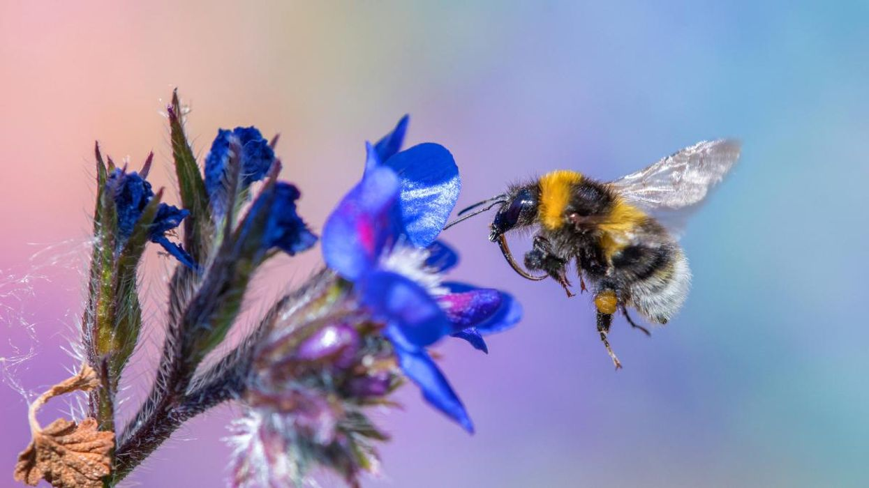 Undisclosed Ingredients in Roundup Are Lethal to Bumblebees, Study Finds