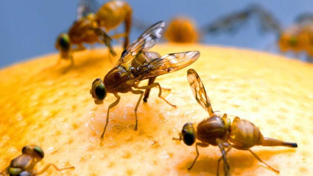 Neuroplasticity can be turned on and off in the brain of a fruit fly