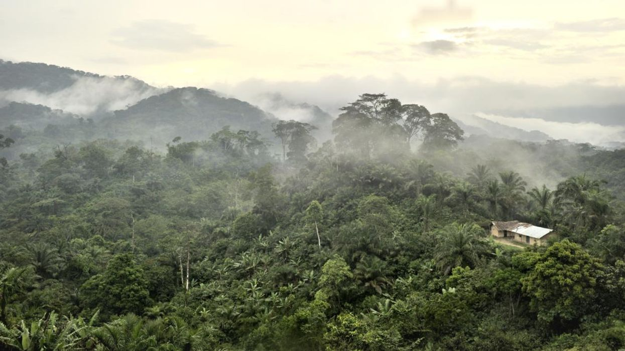 New African Rainforest Map Shows Which Areas Are Most Vulnerable to Climate Crisis