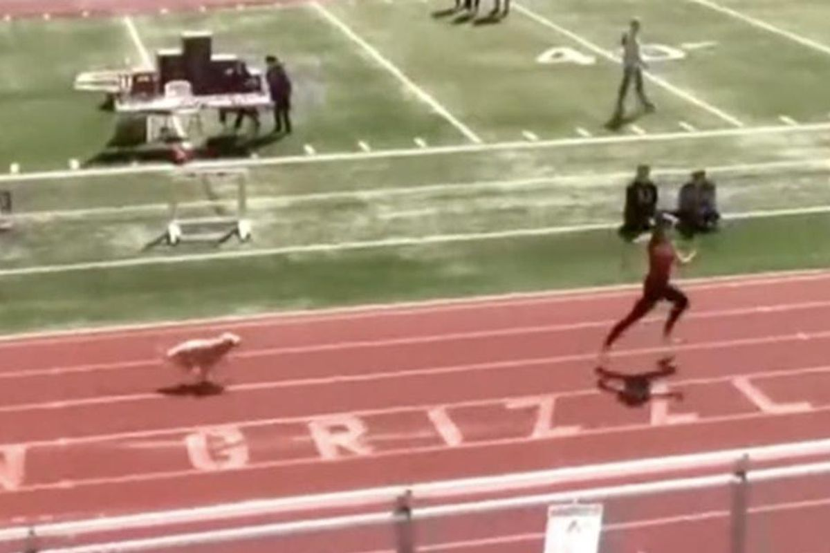 A lightning-fast dog snuck onto a high school track and raced past the competition