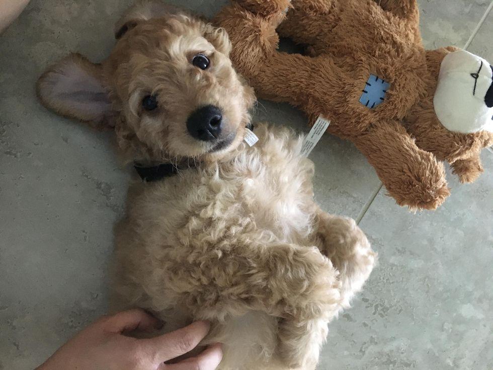 Meet My Dog: Nio, Who Lives In Estero, Florida