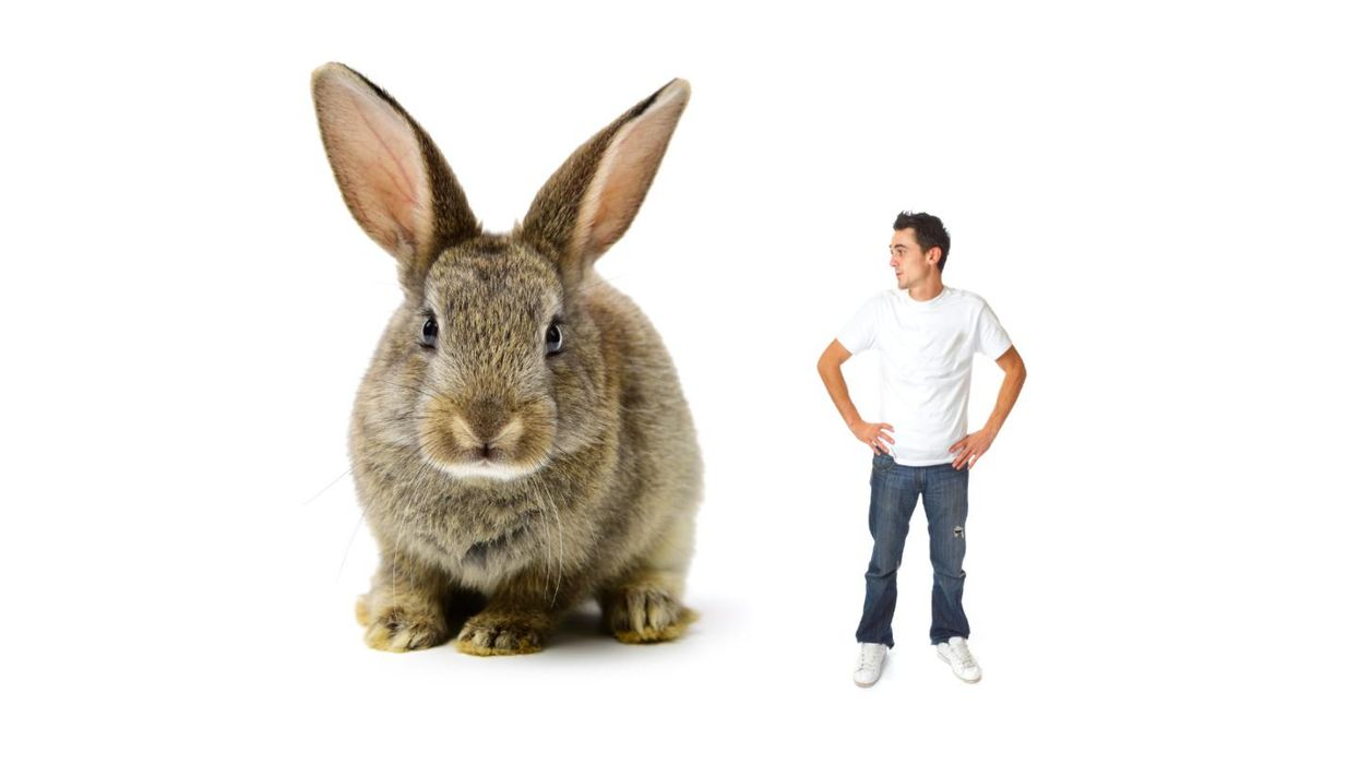 Evolution has robbed us of horse-sized bunnies