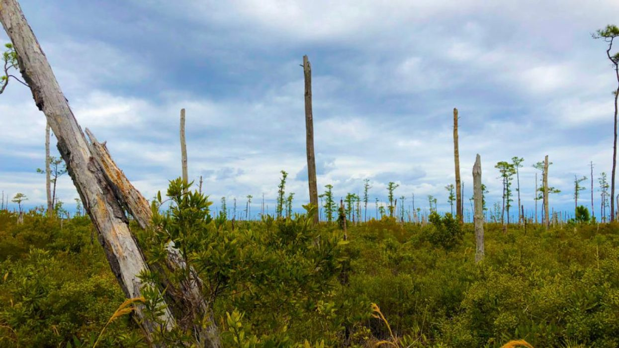 Sea Level Rise Is Killing Trees on the Atlantic Coast, Creating 'Ghost Forests' Visible From Space