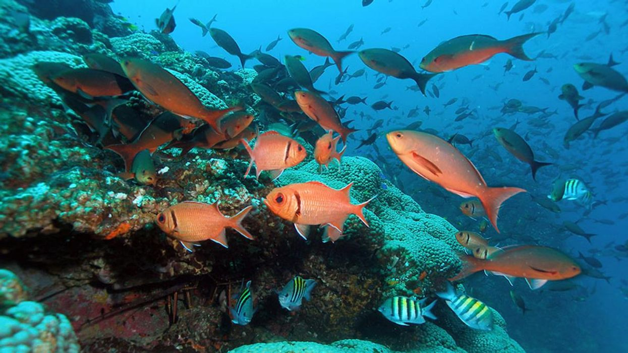 Human Fecal Bacteria Found in Protected Reef Ecosystem 100 Miles off Texas Coast