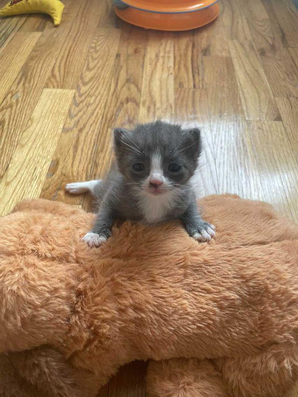 Kitten Waits With Cat Mom in Outdoor Shelter Till Someone Finds Them and Turns Their Lives Around