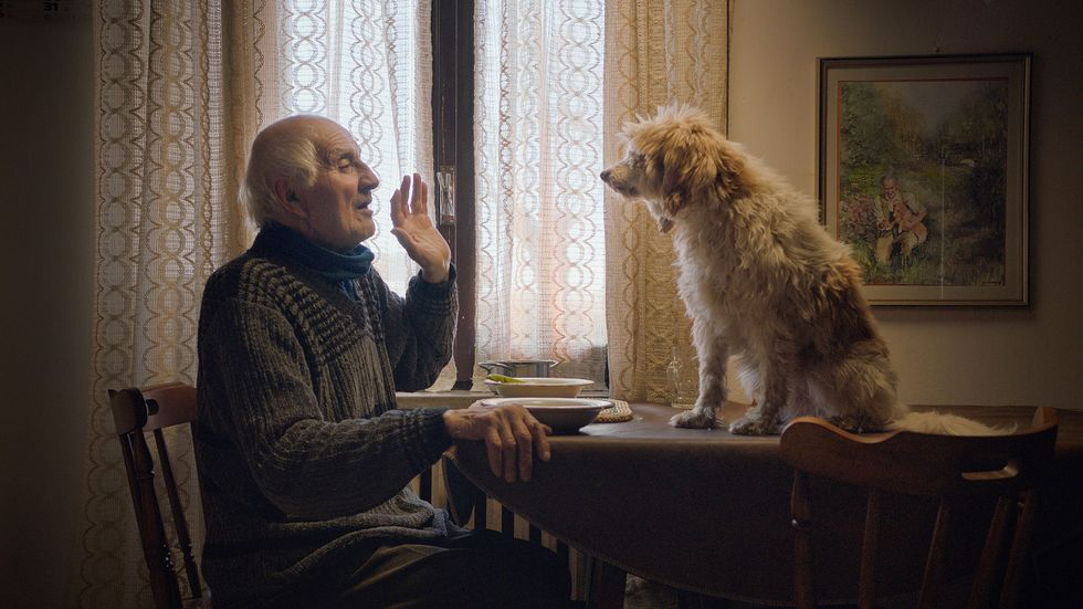 """An elderly man sits at a dining room table with his medium-sized scruffy dog in documentary """"The Truffle Hunters."""" The man is in his modest Italian home. He's wearing a brown sweater and he holds up his left hand while talking to his dog. His dog sits on the dining room table. The dog has scruffy, long, sandy-colored fur."""