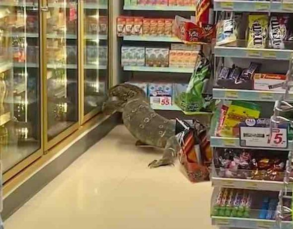 VIDEO: 6-foot-long monitor lizard invades 7-Eleven as shocked customers give it plenty of room to shop