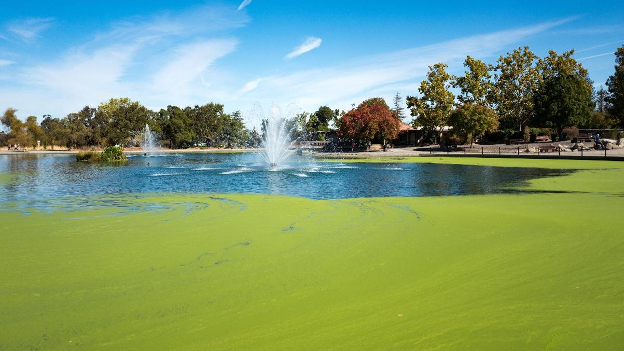 Algal Blooms Could Spew Lethal Toxins Into the Air, New Study Suggests