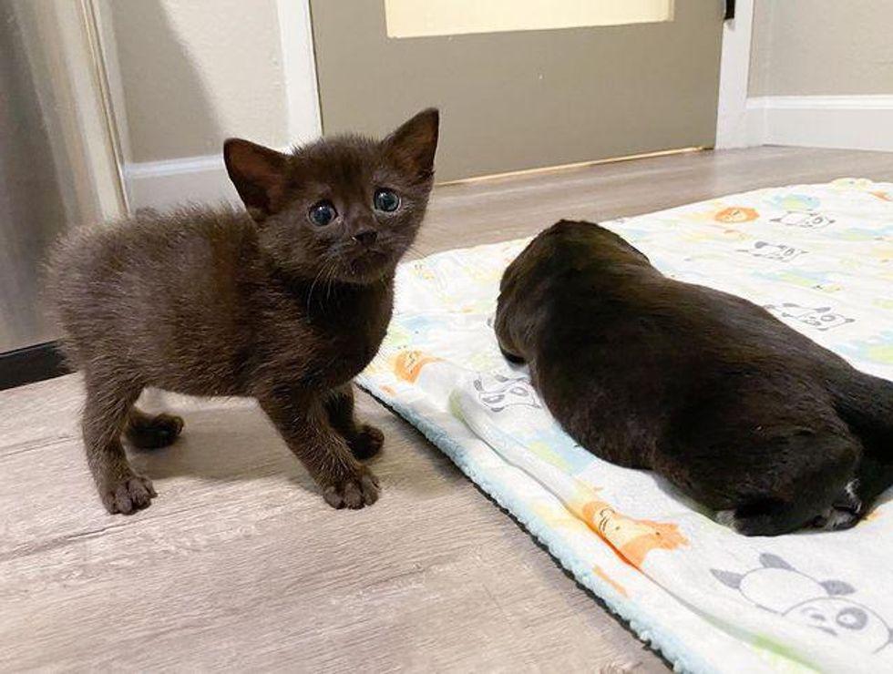 """Gatito descubre un """"gato"""" de aspecto extraño en la guardería y se convierten en amigos inesperados"""