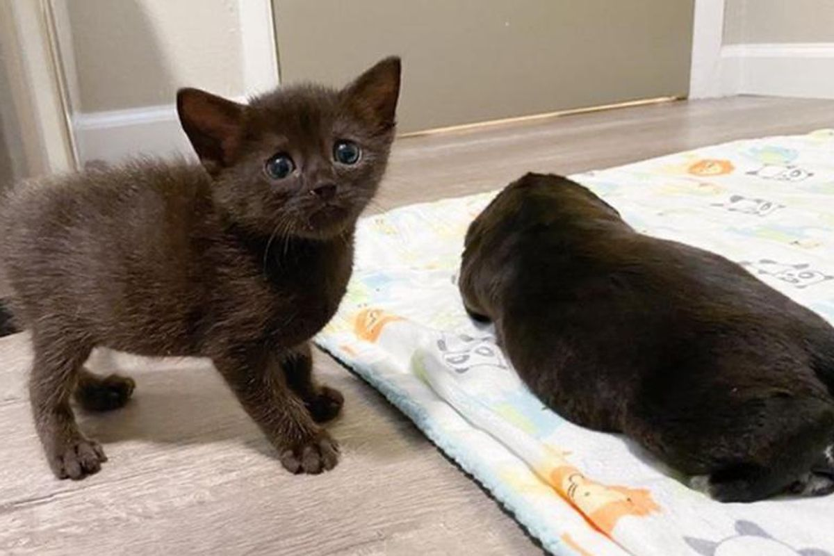 """Kitten Discovers Strange Looking """"Cat"""" in Nursery and They Turn into Unexpected Friends"""
