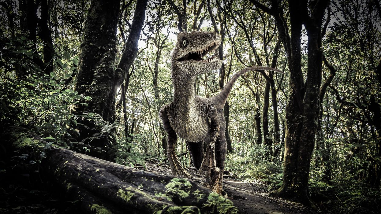 The evolution of modern rainforests began with the dinosaur-killing asteroid
