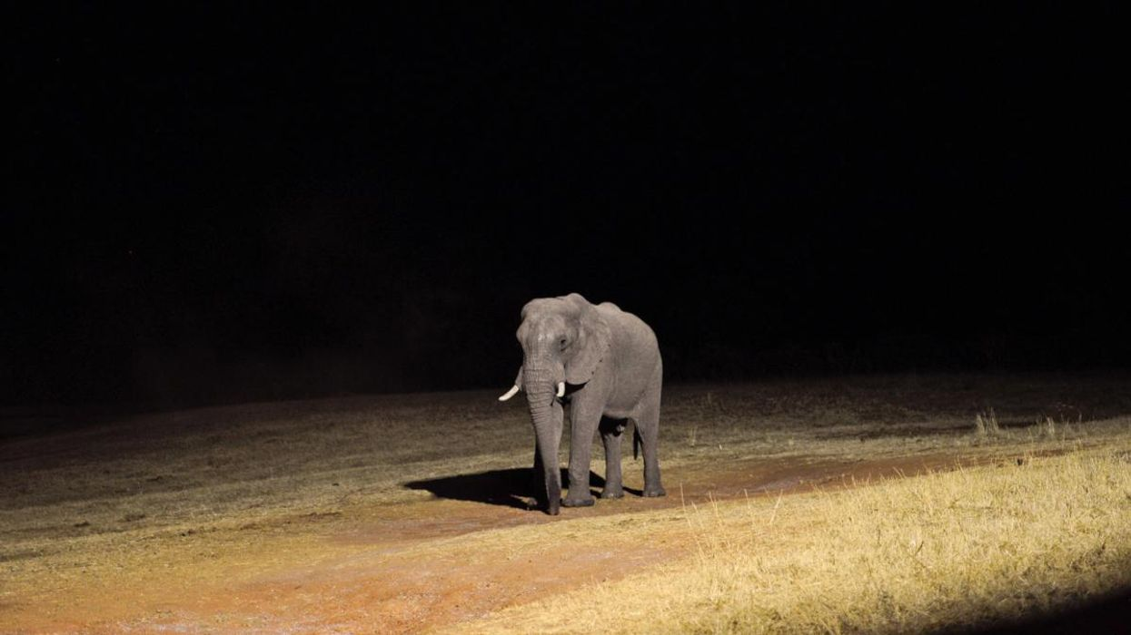 Southern Africa's Ivory Delusion
