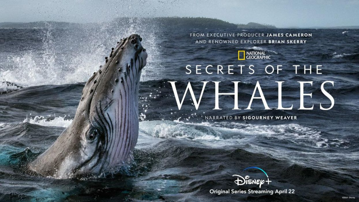 National Geographic Earth Day Series Provides a Rare Glimpse Into Whale Culture