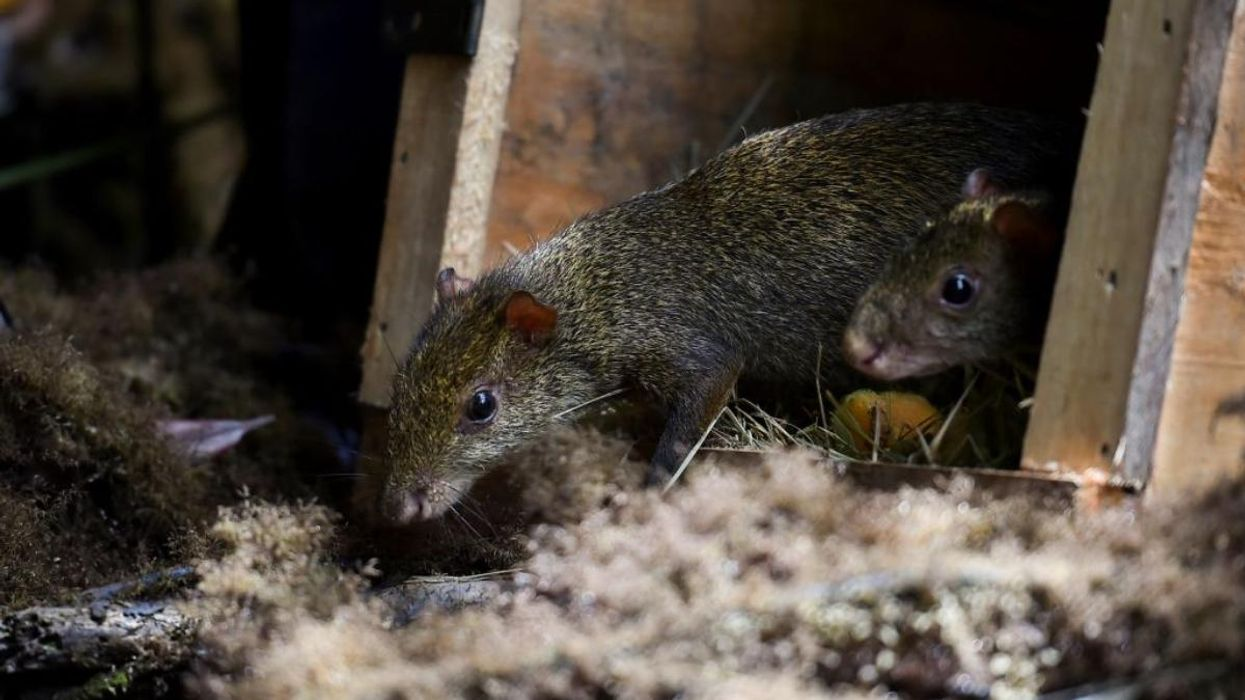Wild Animals More Likely to Be Traded From Poorer to Richer Nations, Study Finds