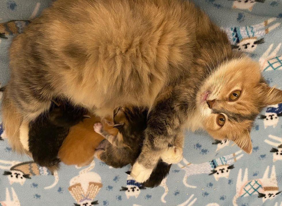 nursing cat mom, sweet cat