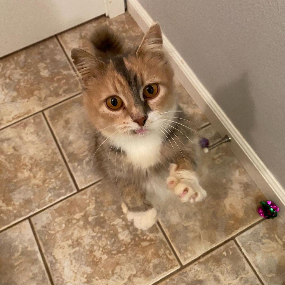 cute cat, smile, paws