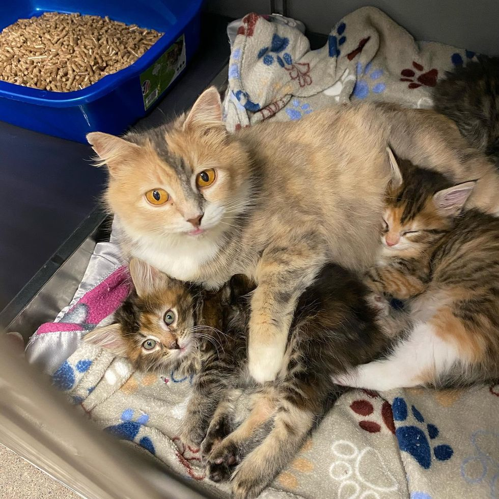cuddles, cute kittens, cat mom