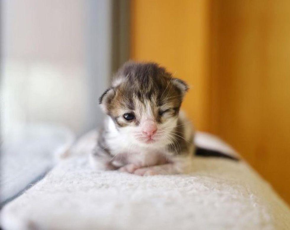 tiny kitten, wink