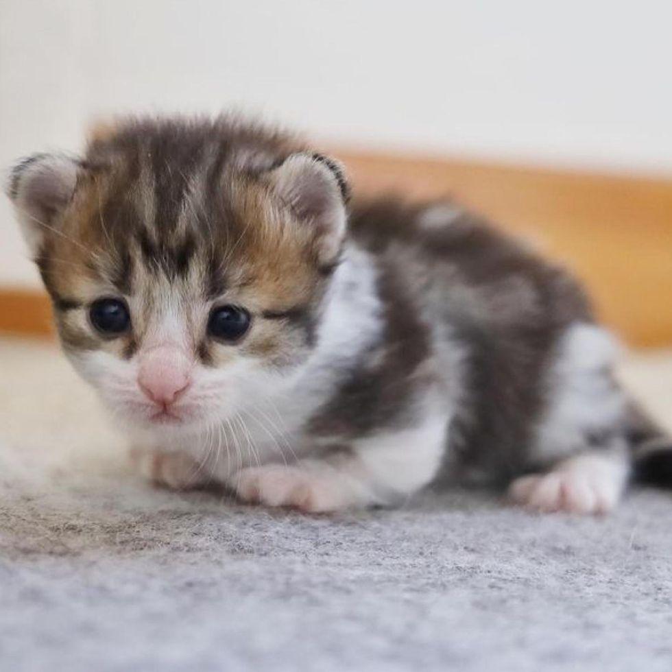 kitten, walking, paws
