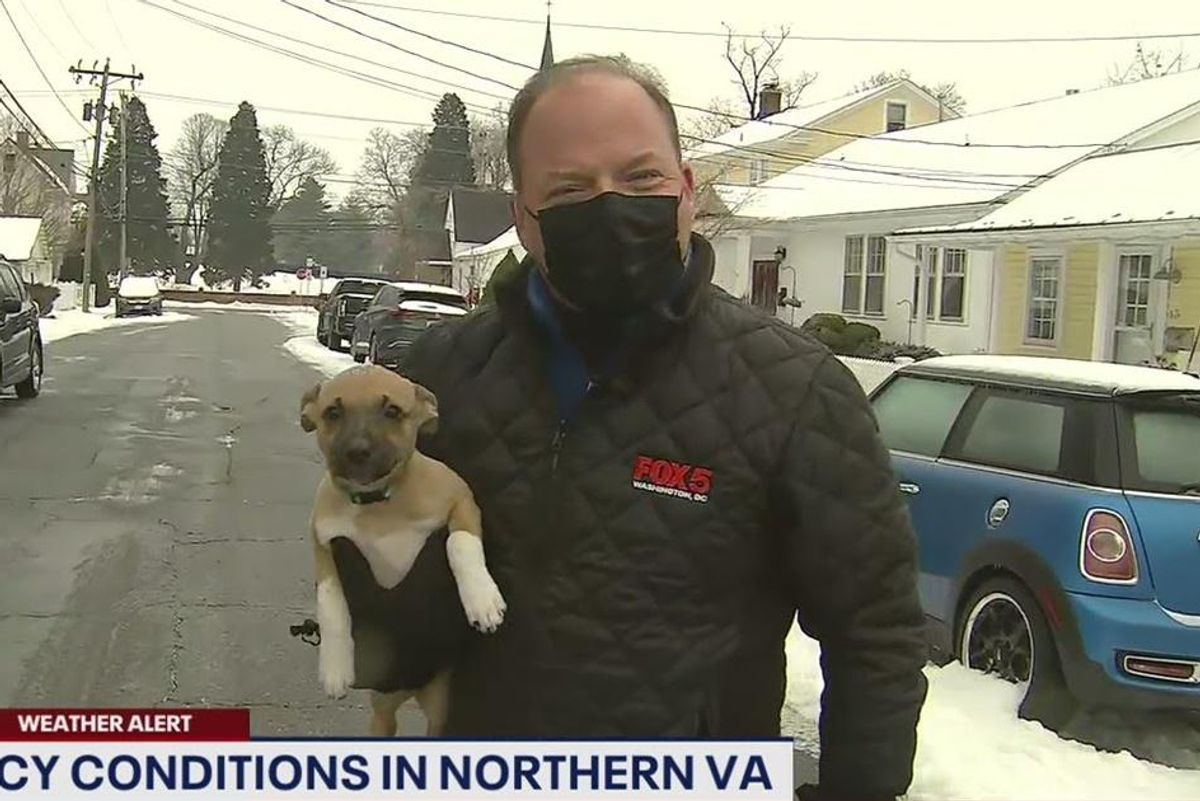 Pierogi the puppy crashed a live weather report and there's nothing more adorable