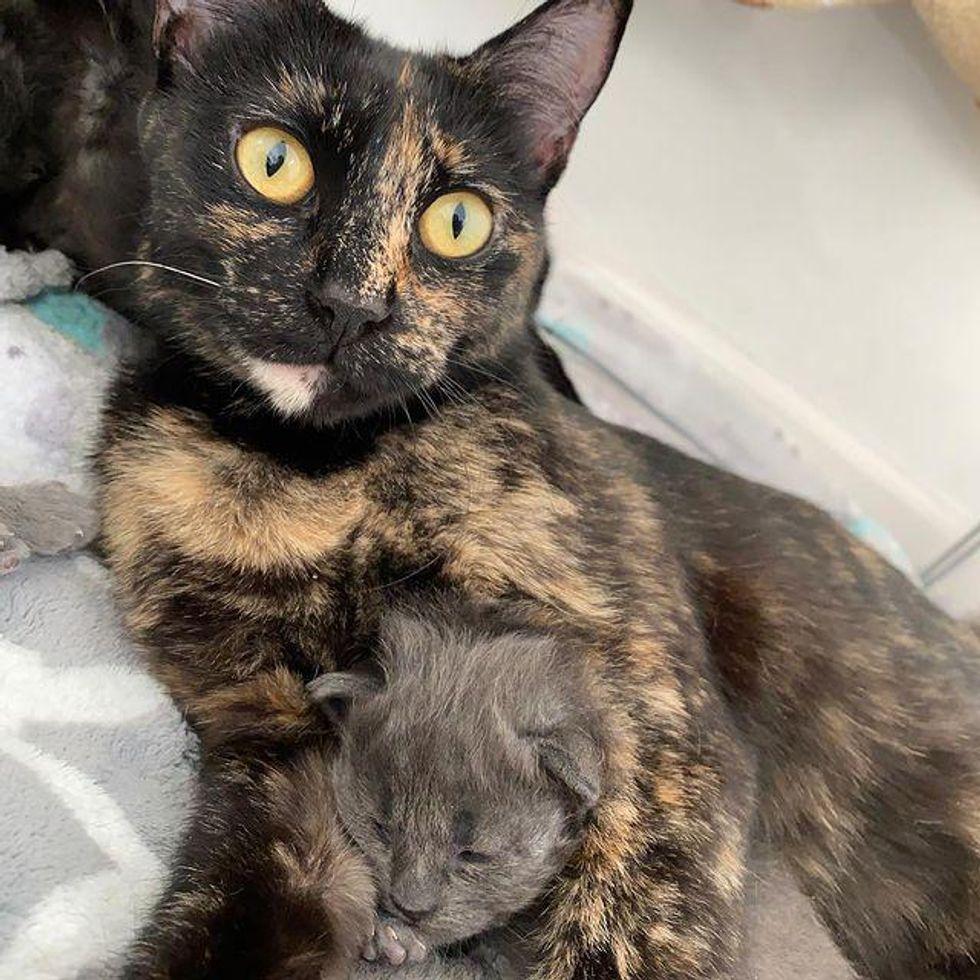 cat mom, tortie cat, kitten