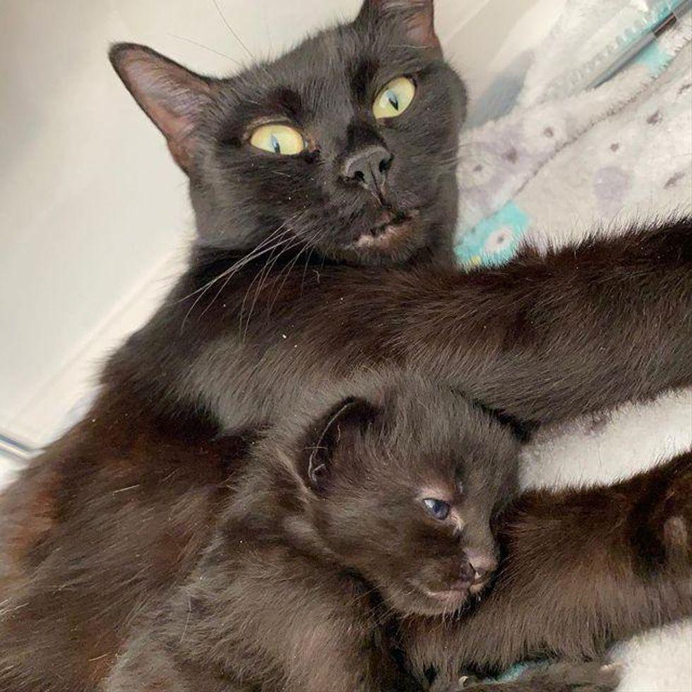 cat mother, mom, kitten