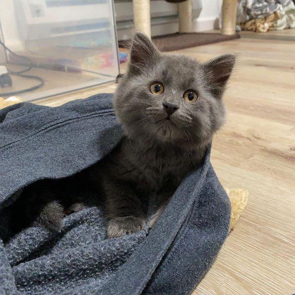 cute kitten, cheeks, adorable