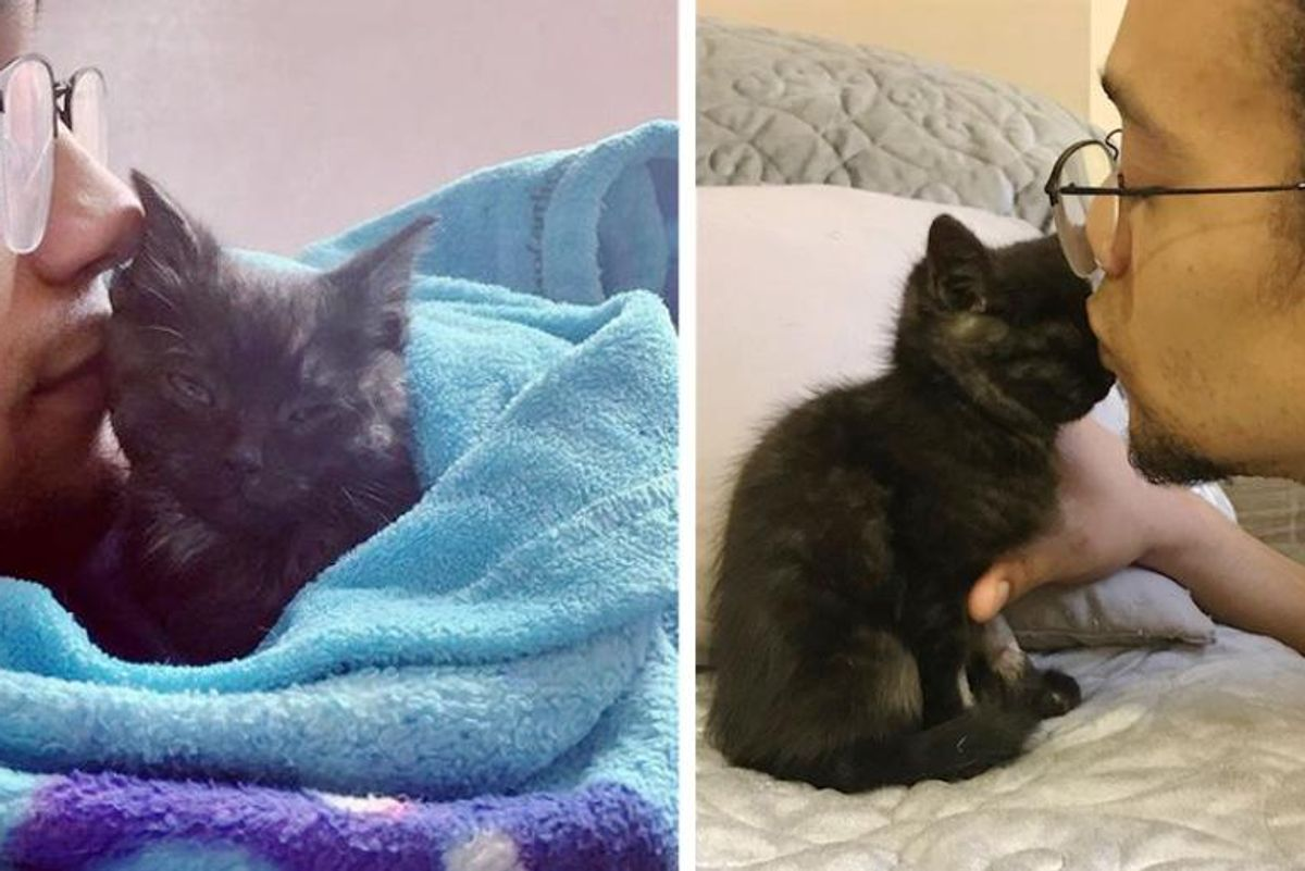 Kitten Turned the Corner with Help of Kind Couple and Became the Sweetest Cat with So Much to Give