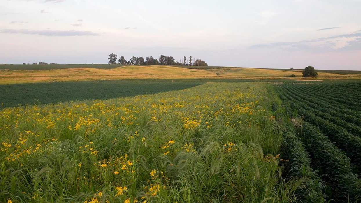 Climate-Friendly Farming Strategies Can Improve the Land and Generate Income for Farmers