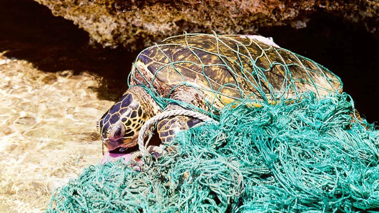 Who's to Blame for the Lawbreaking and Habitat Destruction in U.S. Fisheries?