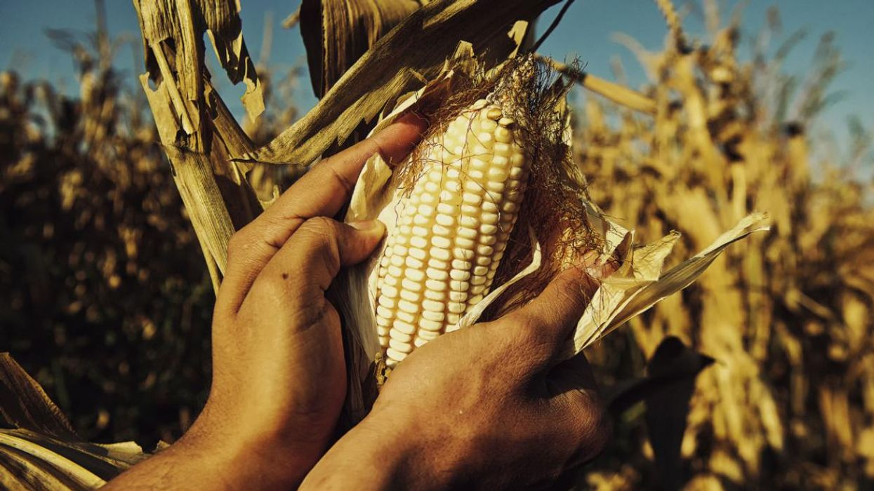 80 Groups Blast U.S. Interference in Mexico's Phaseout of Glyphosate and GM Corn