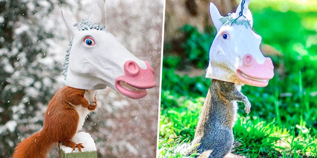 You Can Get a Unicorn Head Squirrel Feeder for Your Yard and It's Hilarious