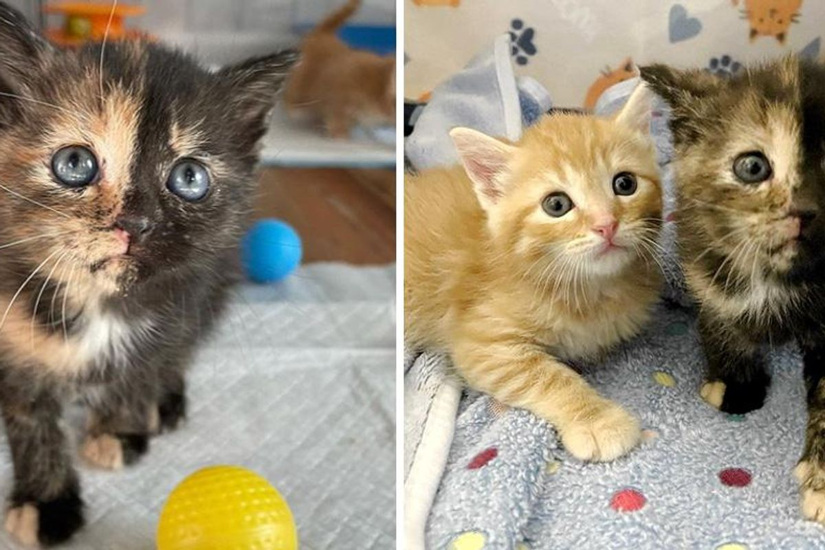 Kittens Found Courage with Help of Family, One of Them Quickly Discovers Her Tortitude
