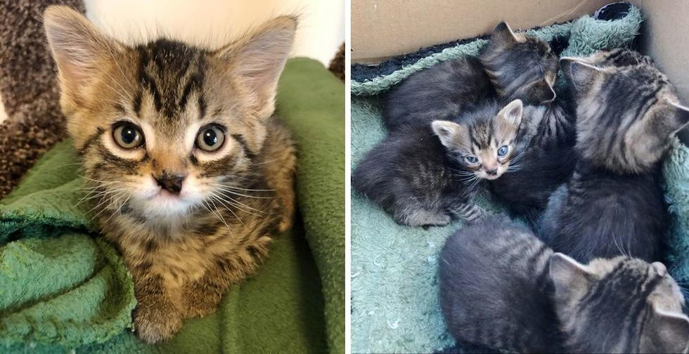 Kittens are Found Nestling Behind Stacks of Drywall, One of Them is Exceptionally Small
